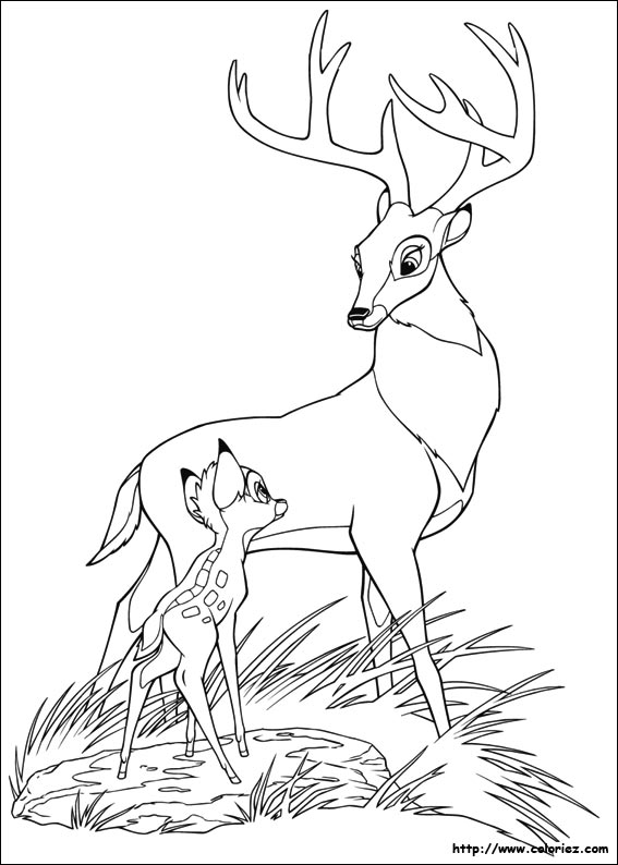 Index of /images/coloriage/bambi-2