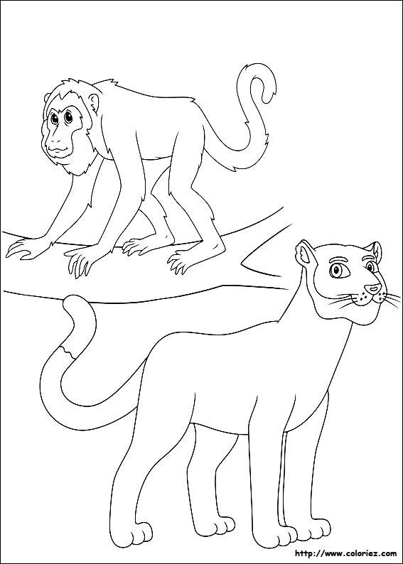 Puma Animal Dessin