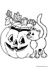 Une citrouille d'Halloween et un chat