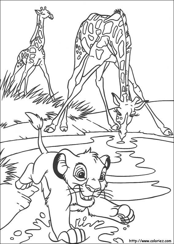 simba et les girafes