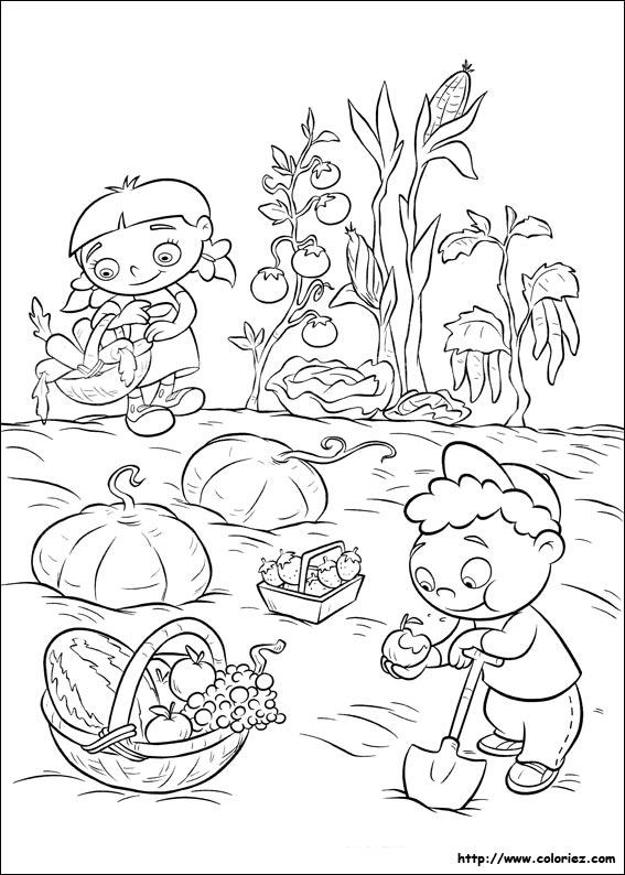 Fruits et légumes du jardin. quincy quant à lui se contente de les