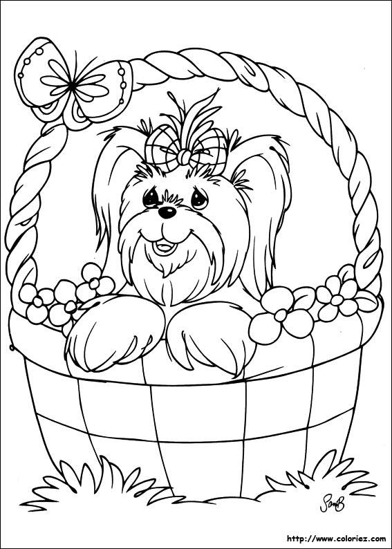 Coloriage petit chien dans son panier - Coloriage chiot ...