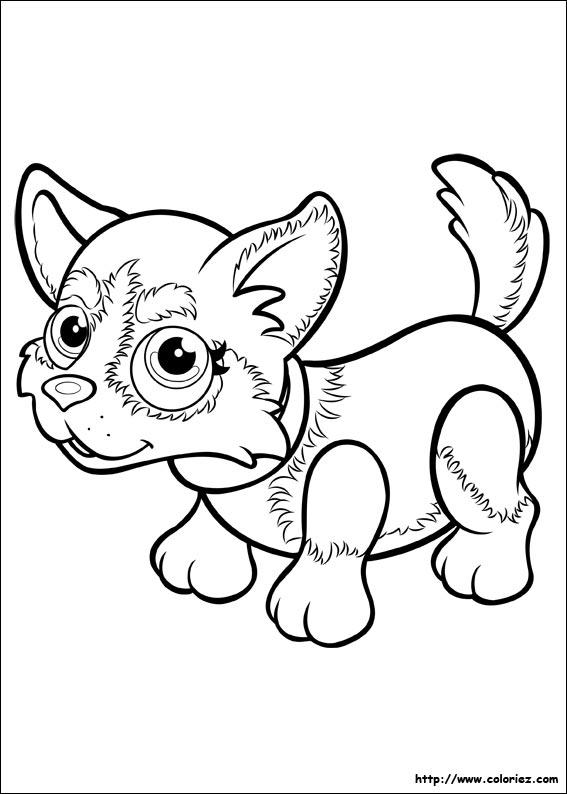 Coloriage husky - Coloriage pet ...
